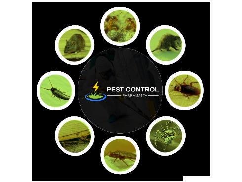 Pest Control Parramatta