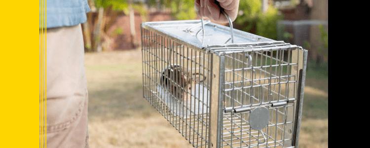 Rodent Control Parramatta